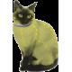 Naturligt Lopp- och Fästingshalsband för Katt